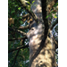 Webs on Oak Tree
