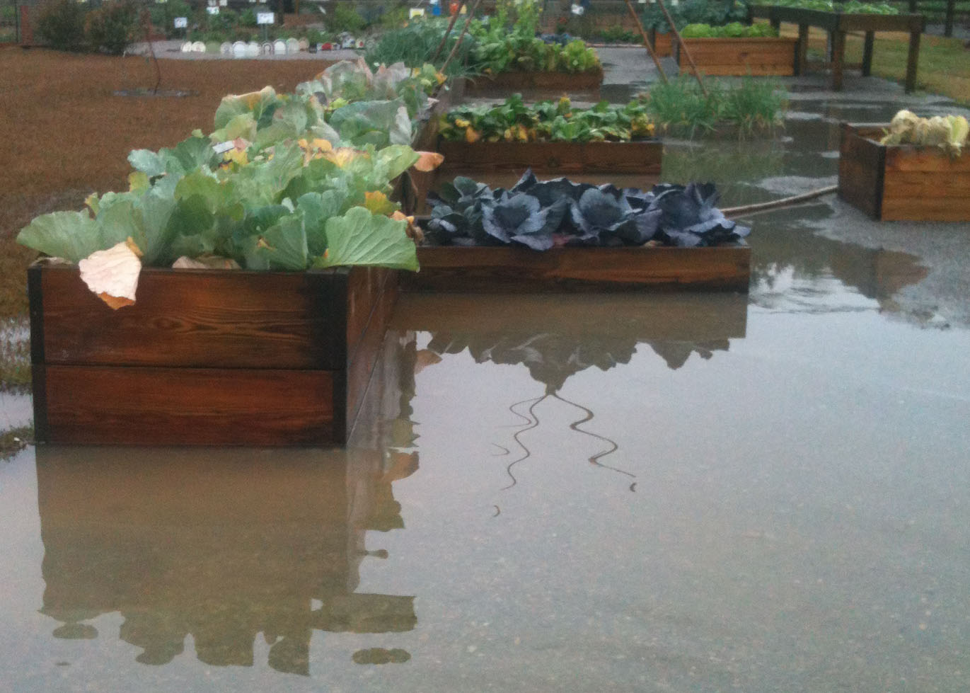 011 Without raised beds providing adequate drainage.jpg thumbnail