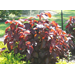 Low-maintenance plants provide color in late summer and fall