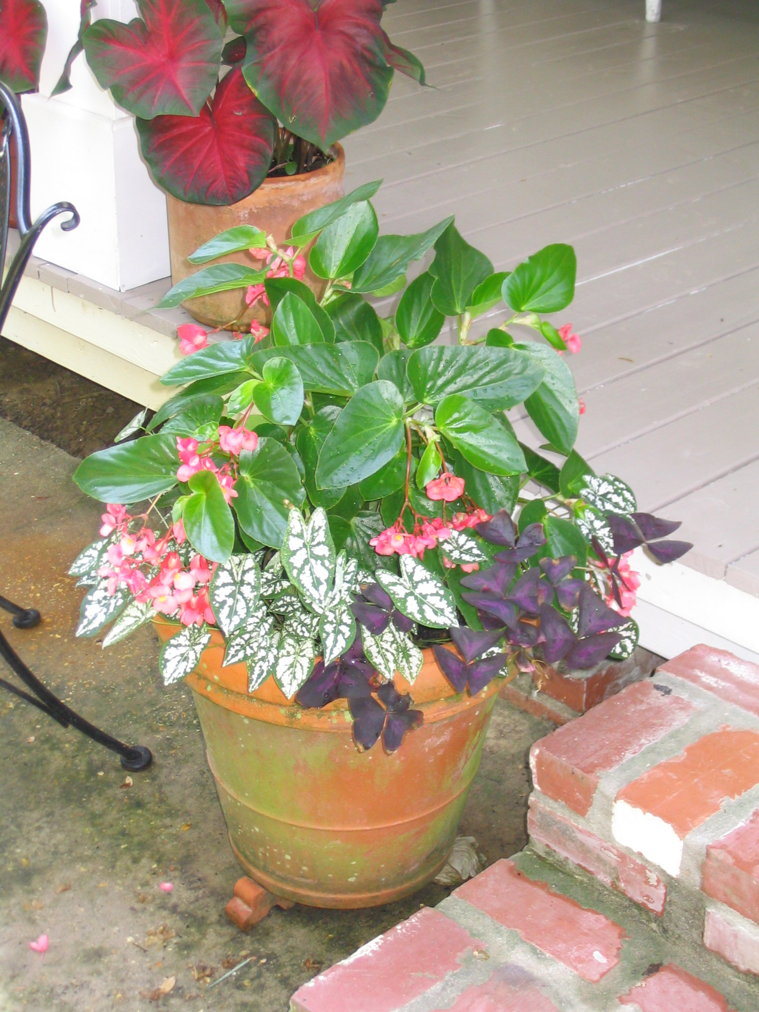 Container plants enhance outdoor landscapes