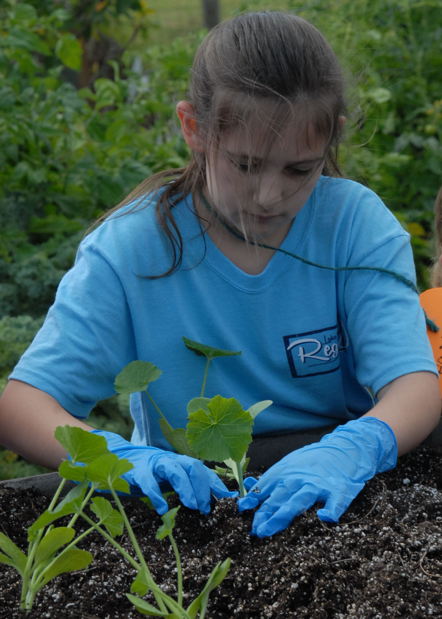 girl in blue planting sweetpotato.jpg thumbnail