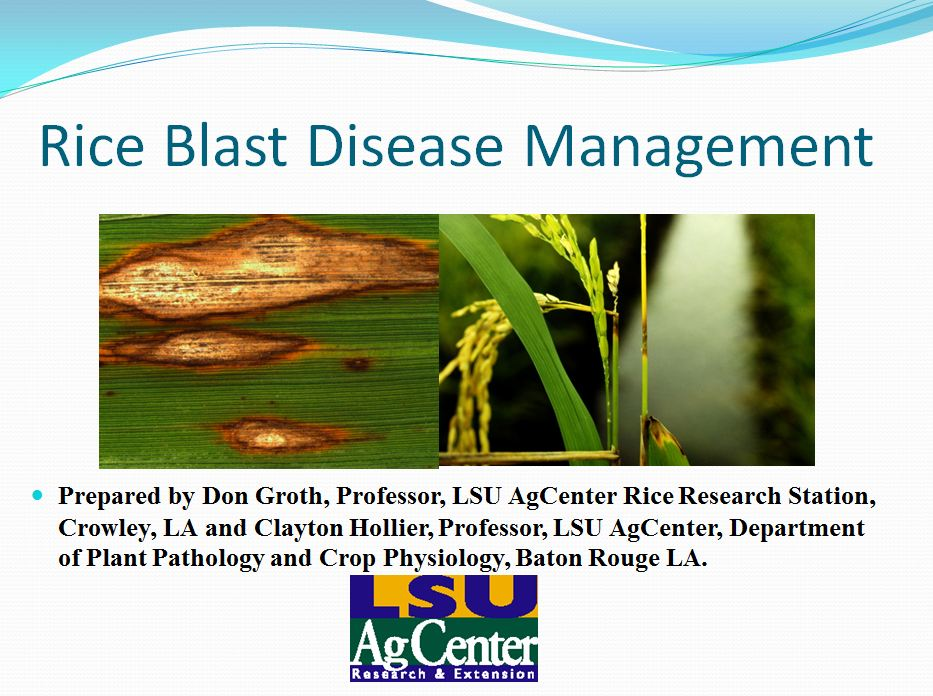 Rice Blast Disease Management 2012