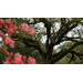 Get It Growing: live oaks are magnificent