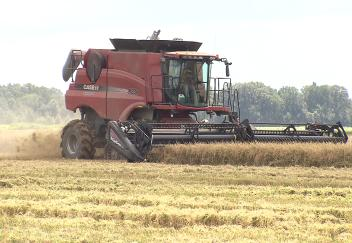 Rice harvest having mixed results in Louisiana