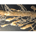 Nematodes on grain sorghum