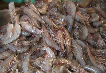 Louisiana fishermen learn the latest commercial regulations