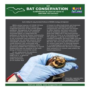 Why Bat Conservation Is Important in Light of COVID-19 and How You Can Help