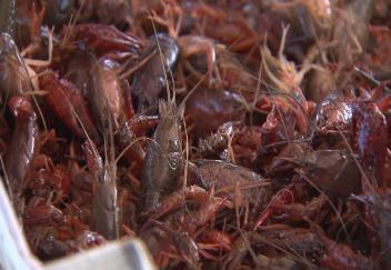 Louisiana crawfish farmers concerned about flood damage