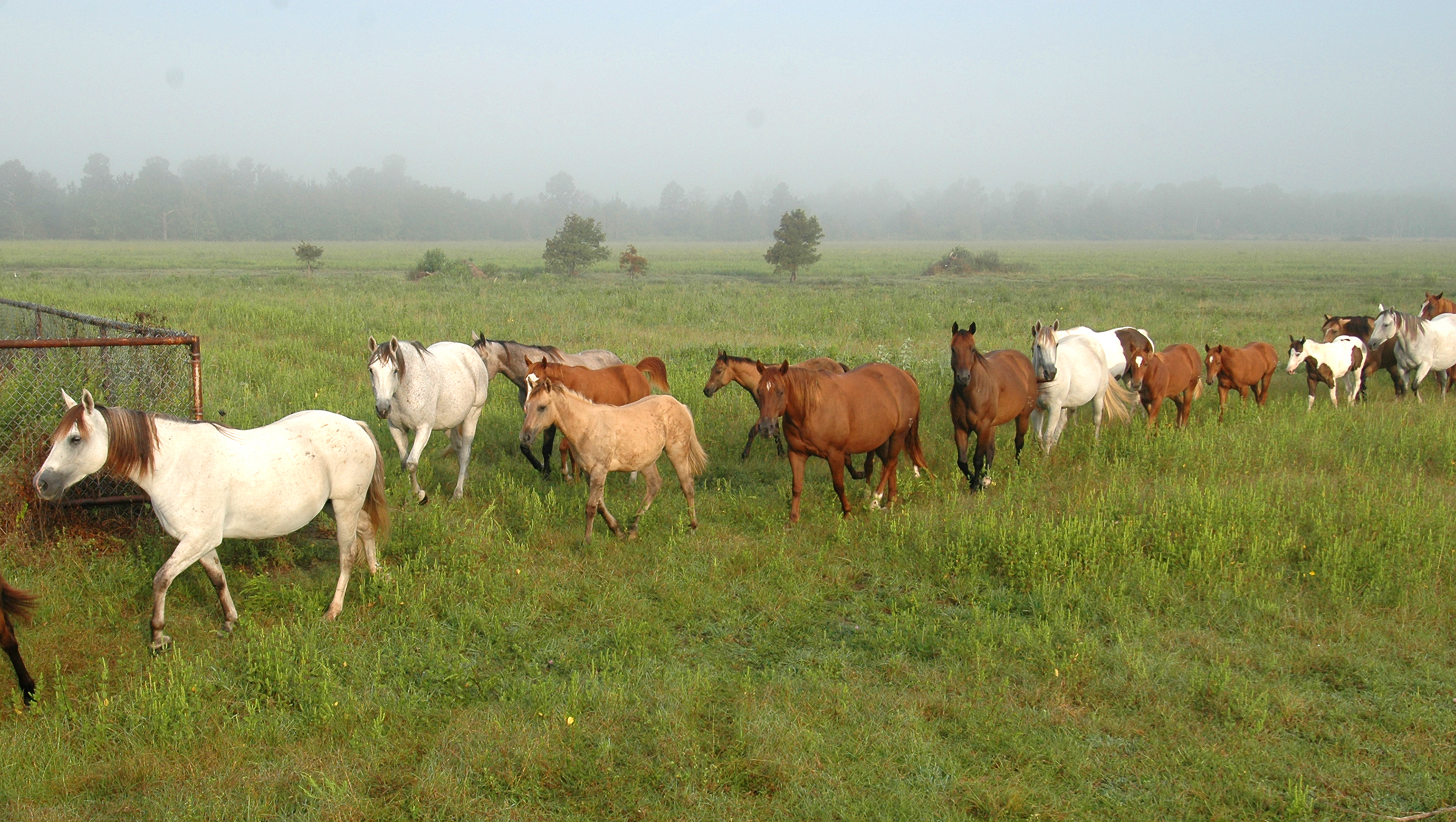 Horse owners should plan ahead for tropical storms