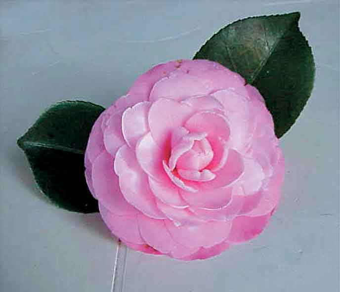 Renowned Private Camellia Collection Goes to Burden