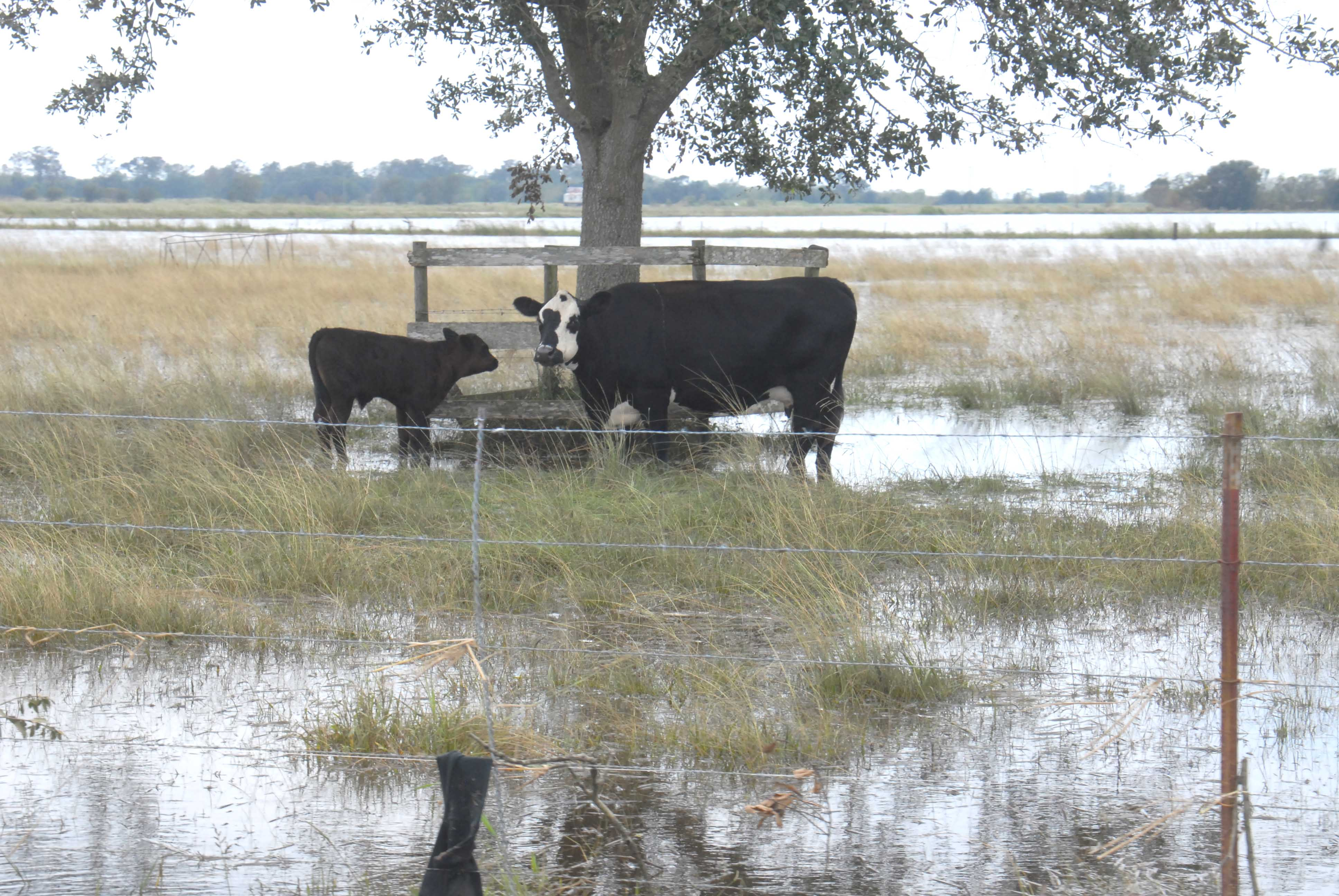 Flood recovery grants approved for farmers