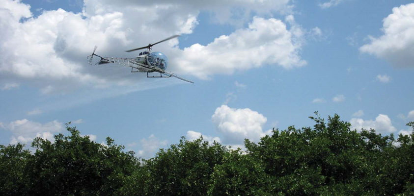 Plane spraying citrus orchard