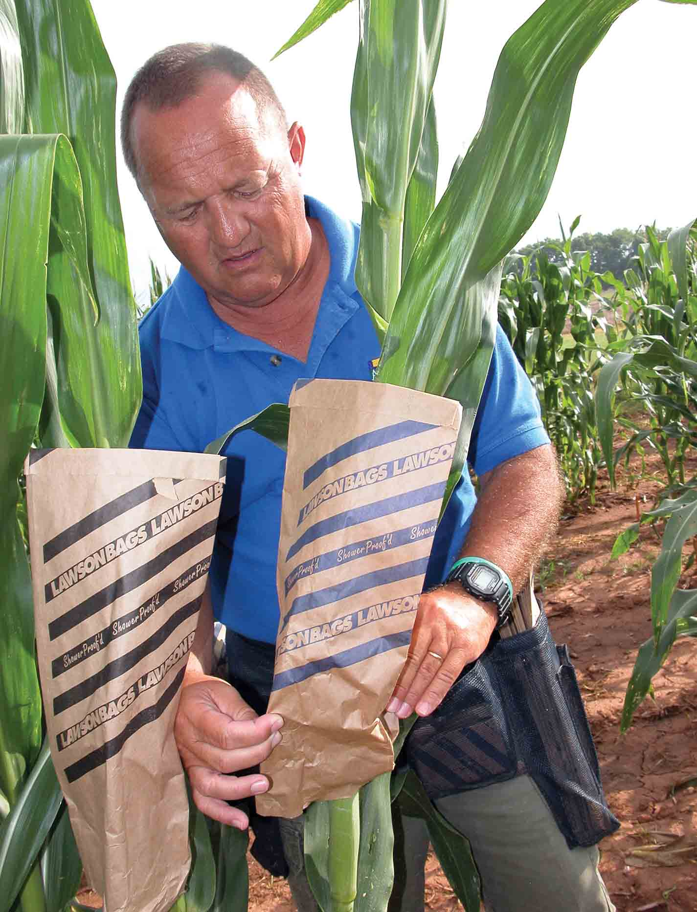 Reducing Aflatoxin in Corn