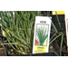 Its a great time to plant tasty chives