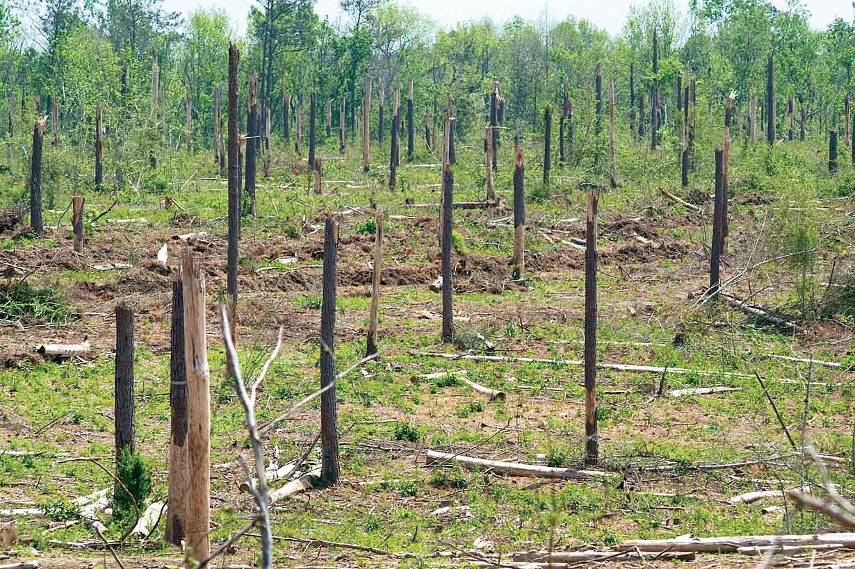 katrina damaged forest
