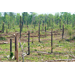 Lee Memorial Forest Serves Louisiana's Forestry Industry