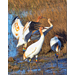 Researchers work to restore whooping cranes in Louisiana