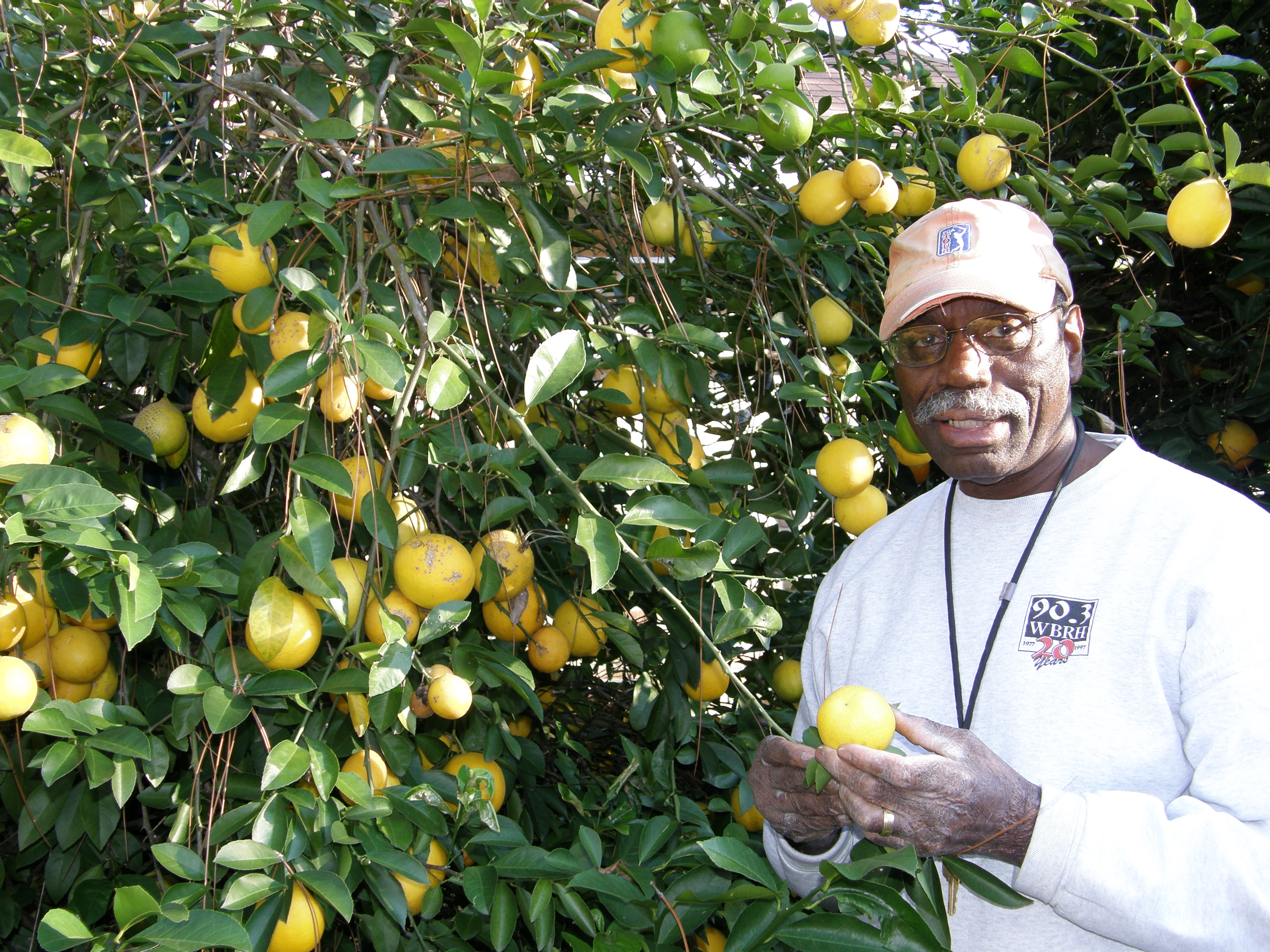 Retired District Court Jude Curtis Calloway with Meyer lemon Tree