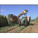 Sugarcane Growers Are Harvesting A Good Crop