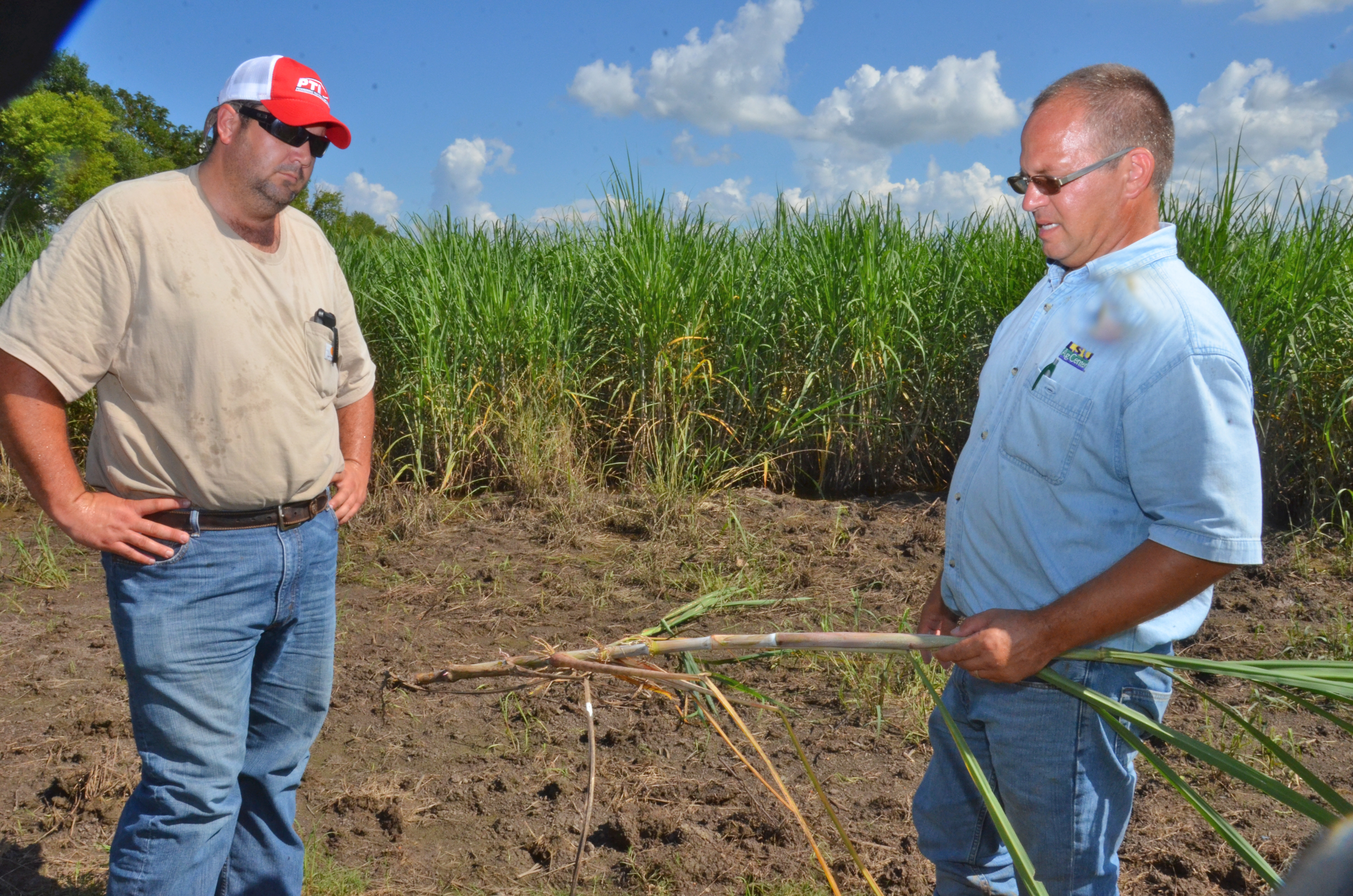 Sugarcane producers anxious to finish planting