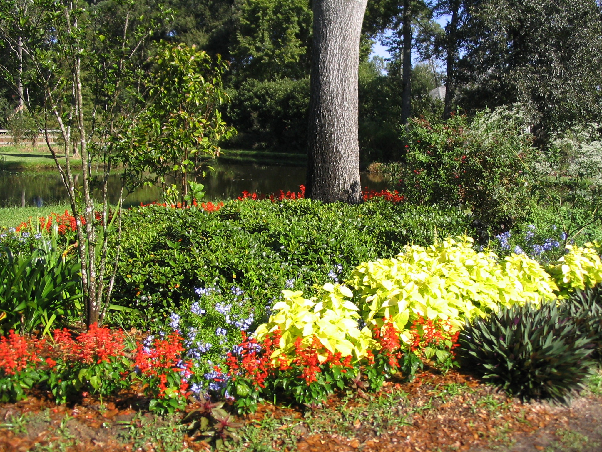 summer flowers add color.jpg thumbnail