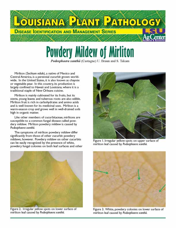Louisiana Plant Pathology:  Powdery Mildew of Mirliton