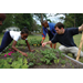 Gardens Grow Student Achievement: Horticulture Enriches School Curriculum