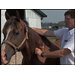 Vaccinate Horses Before Mosquitoes Become Active
