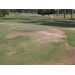 Nematode Management in Golf Greens Changing