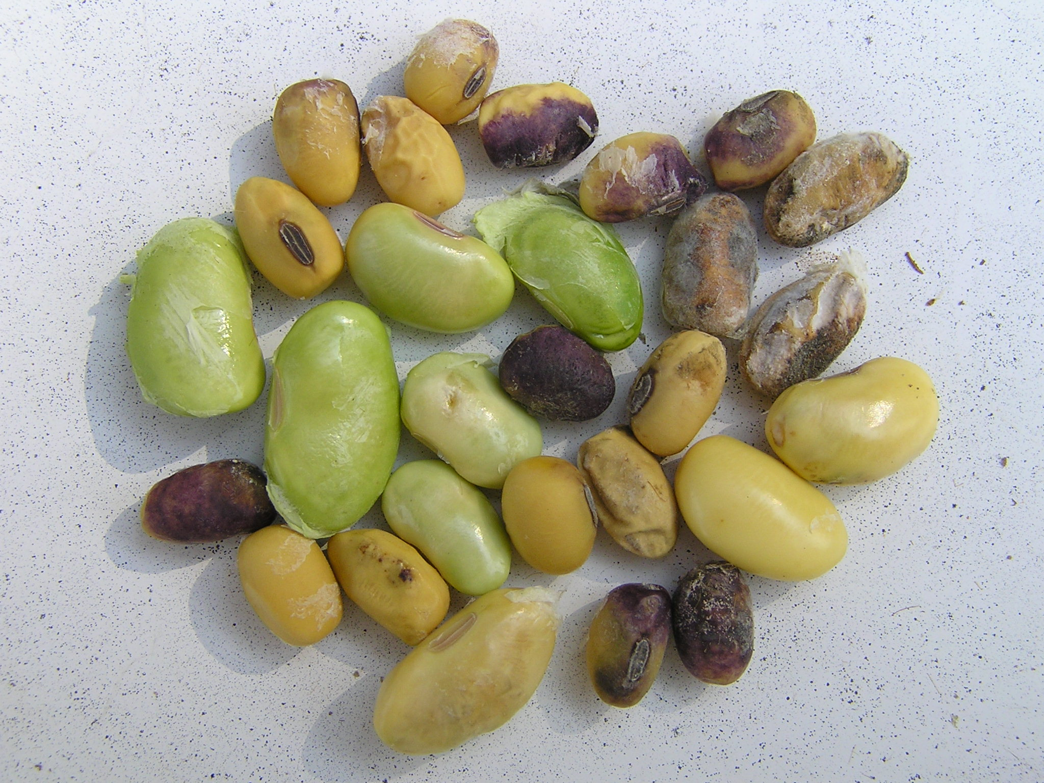 Photo of effects on seeds.