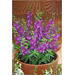 Give proper care to container plants