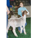 Louisiana youth named champions at 73rd Annual LSU AgCenter Livestock Show