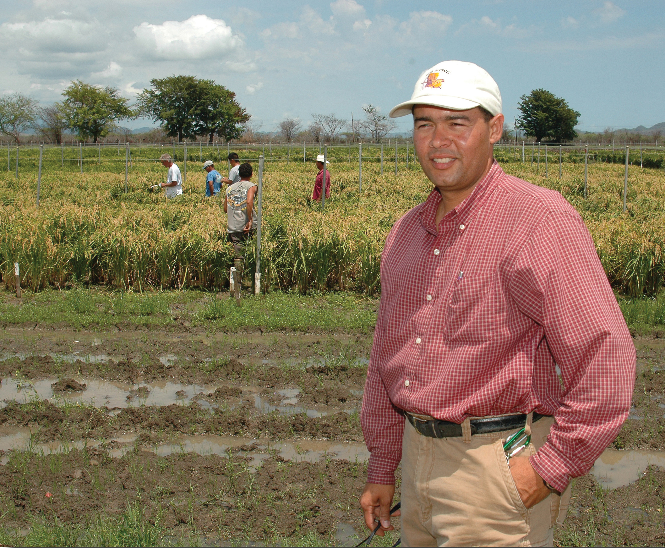 Anthony Rivera oversees the winter nursery in Puerto Rico for the LSU AgCenter and other universitie