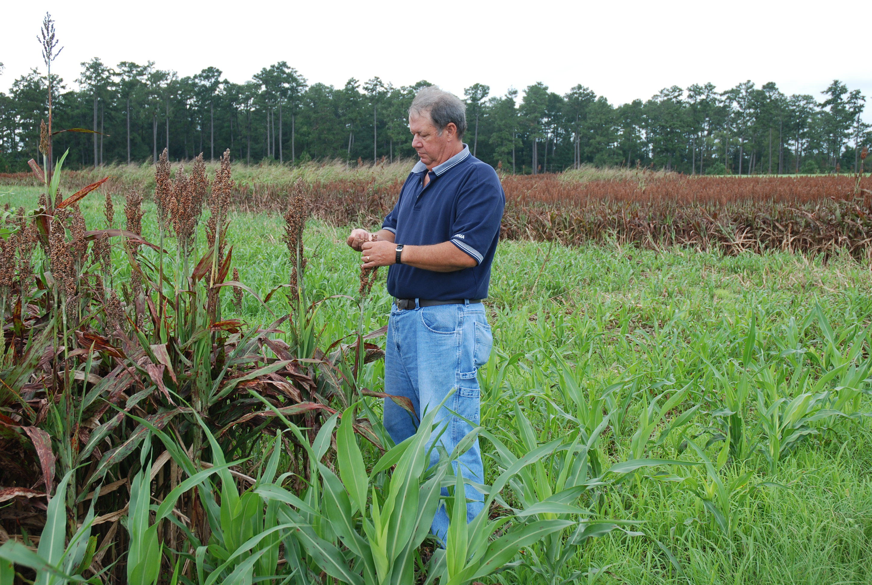 LSU AgCenter Field Days And Workshops Designed To Decrease Citations