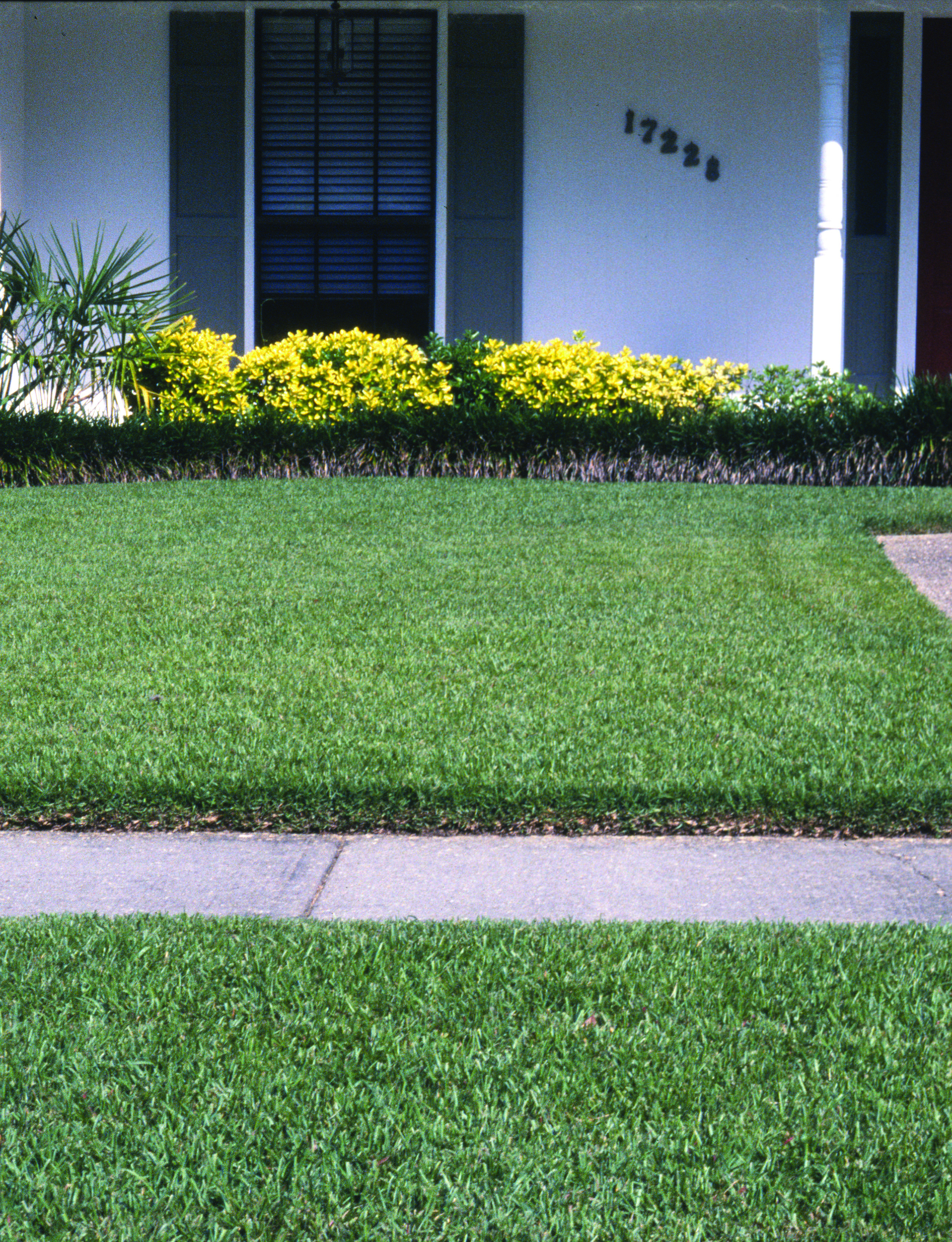 Dealing with grass clippings