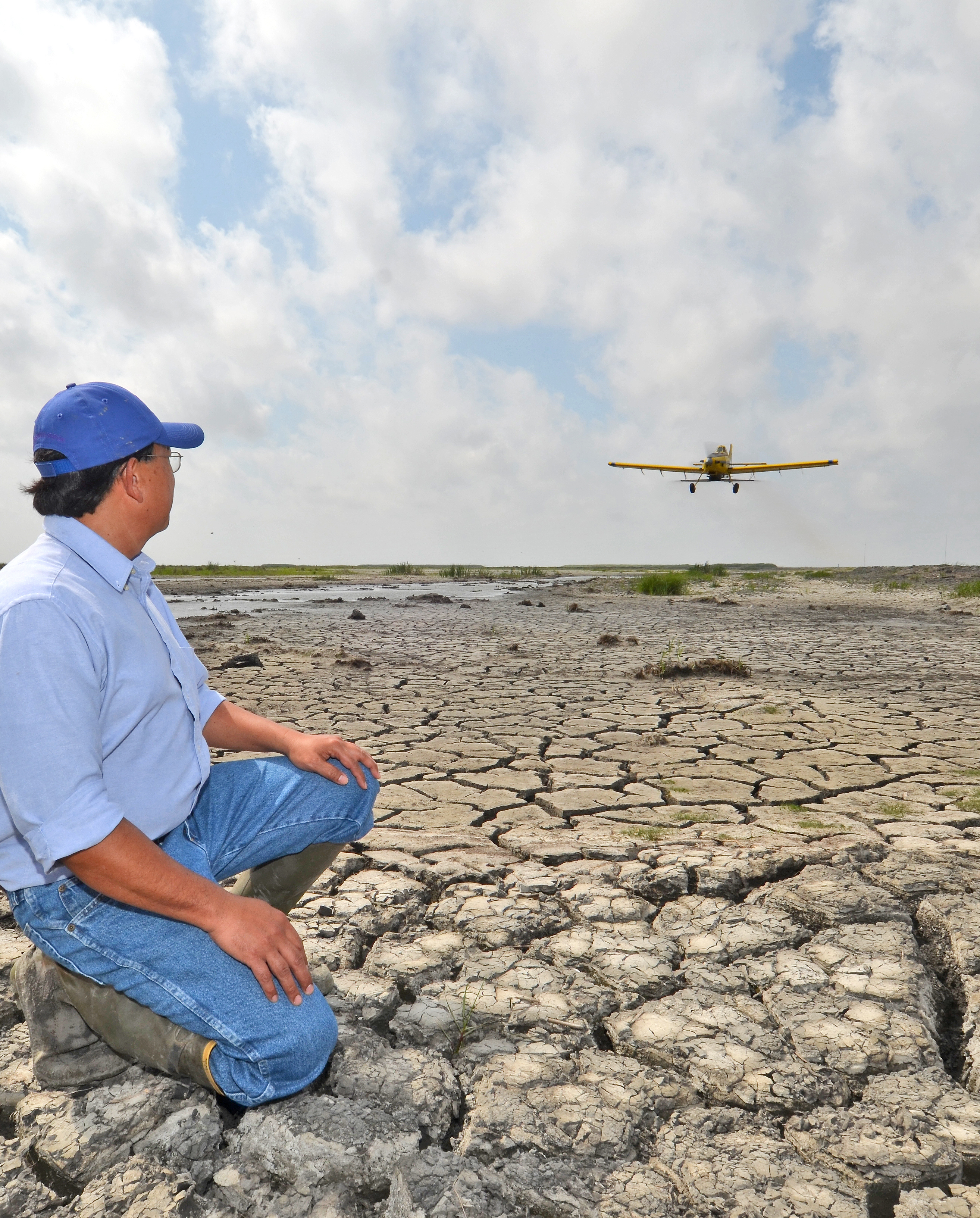 Scientist succeeds with aerial seeding of coastal plants