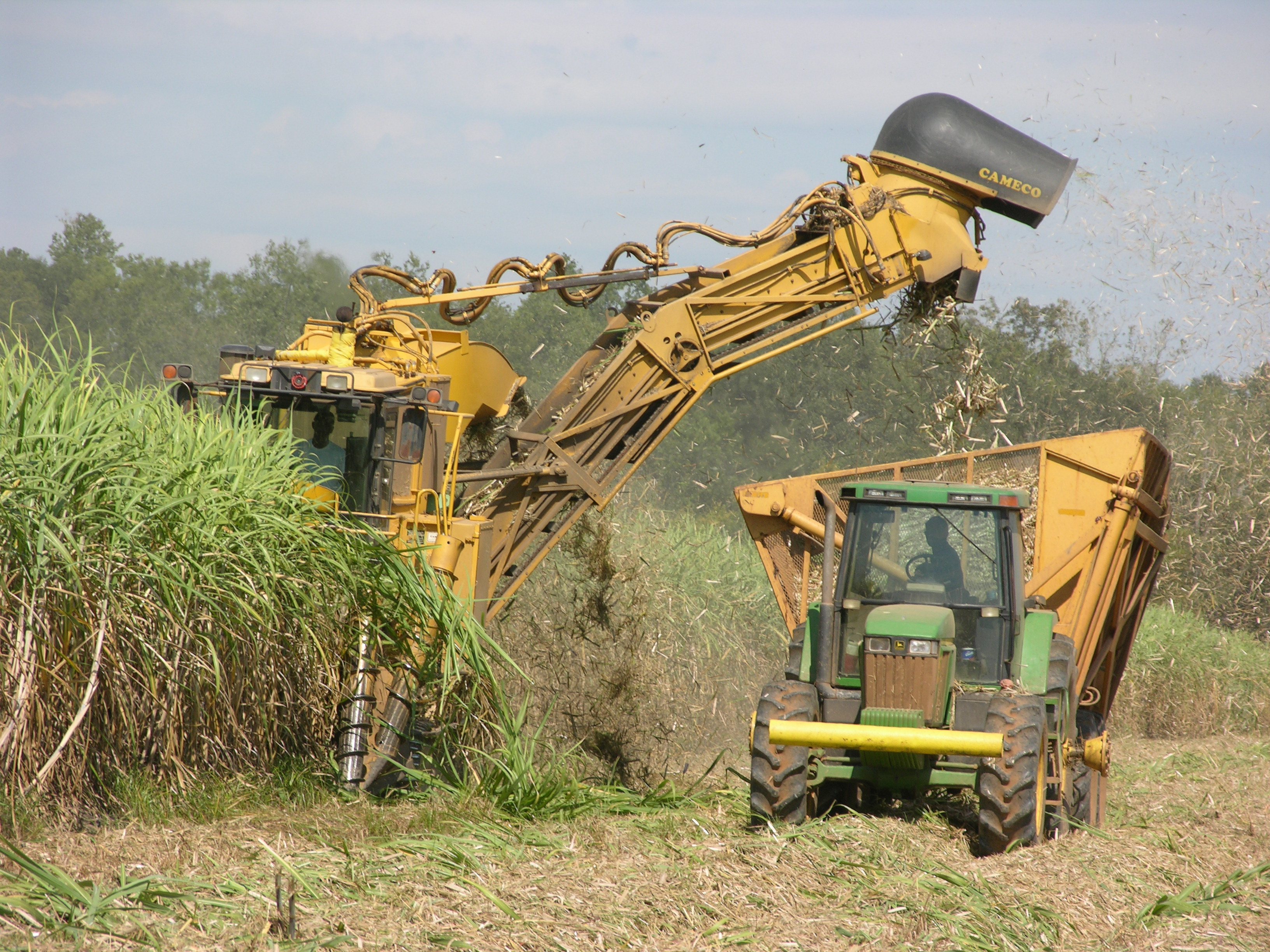 Record crop gives sugarcane growers options