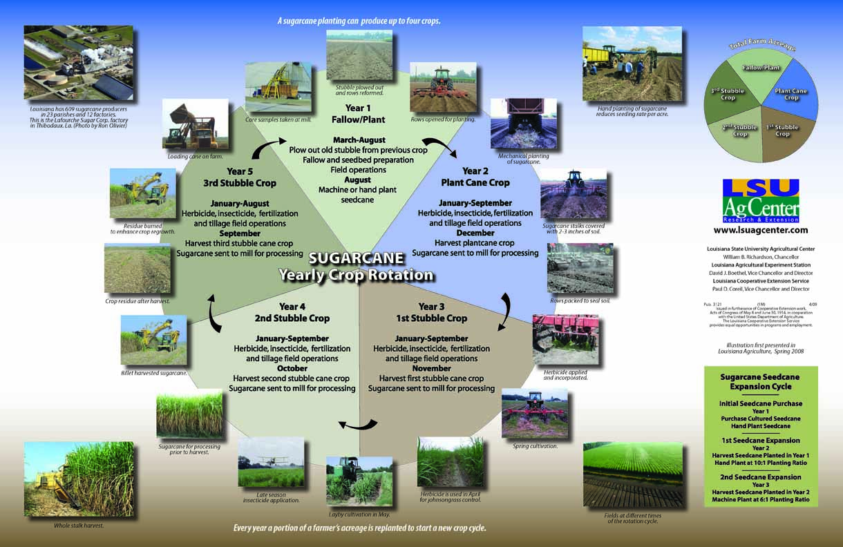 Sugarcane Yearly Crop Rotation Poster
