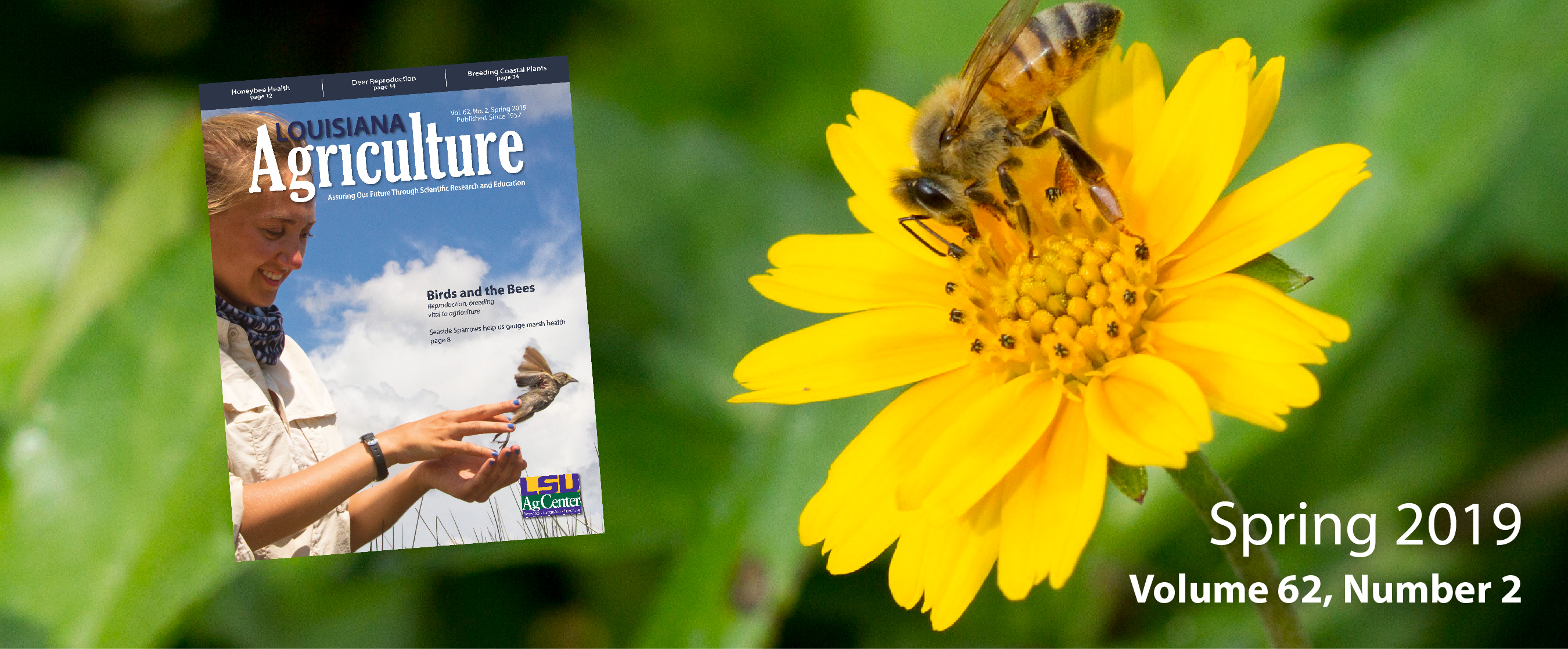 Bee on a yellow flower as well as an image of the front cover of the Louisiana Agriculture Spring 2019 issue.