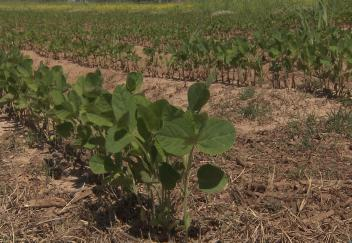 Soybean planting underway across the state