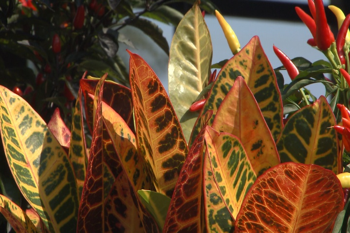 Bring fall colors to your patio