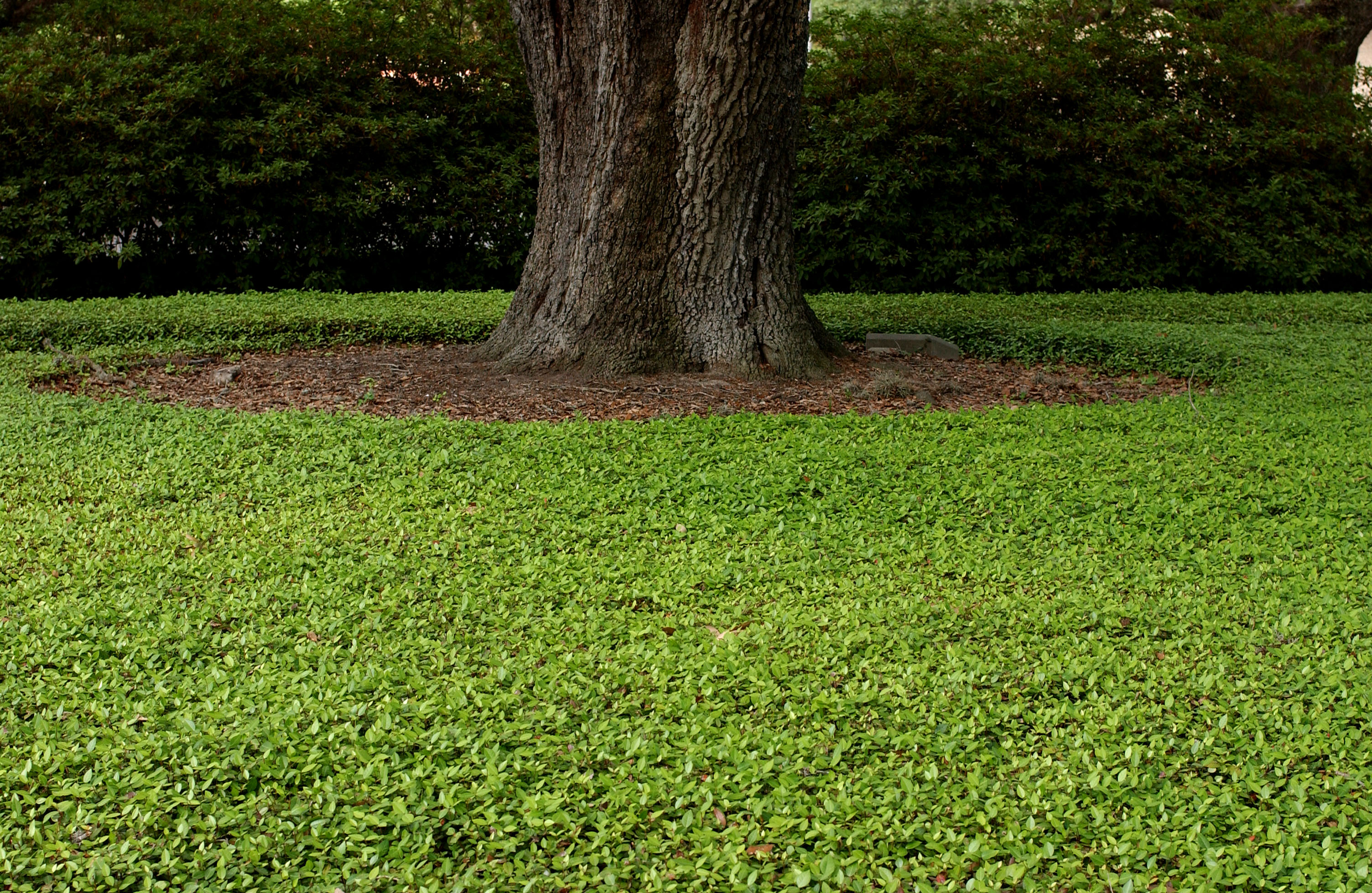 Tips Offered For Managing Shaded Lawns