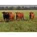 Economic Sustainability of Forage-Fed Beef Systems