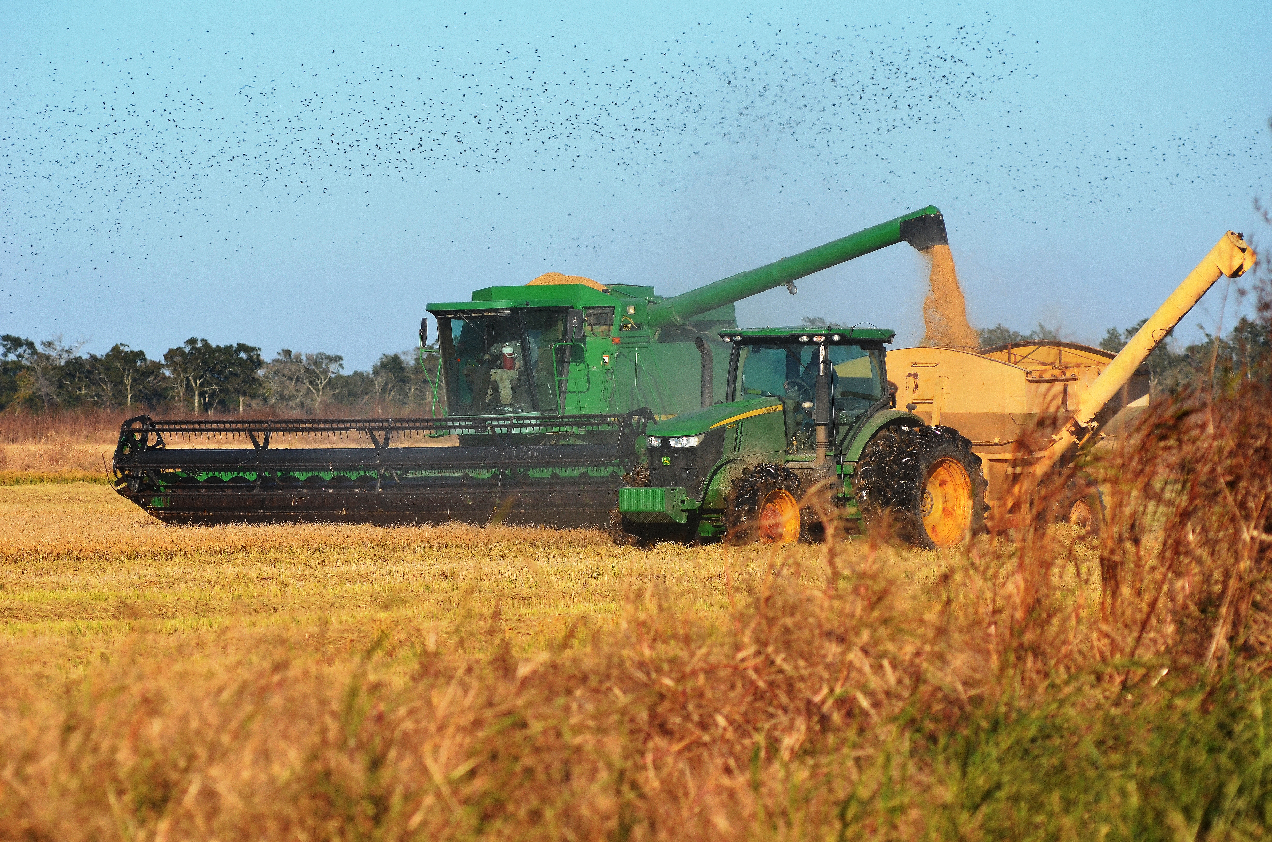 2014 Louisiana Rice Crop in Review