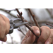 Pruning fruit trees can be beneficial