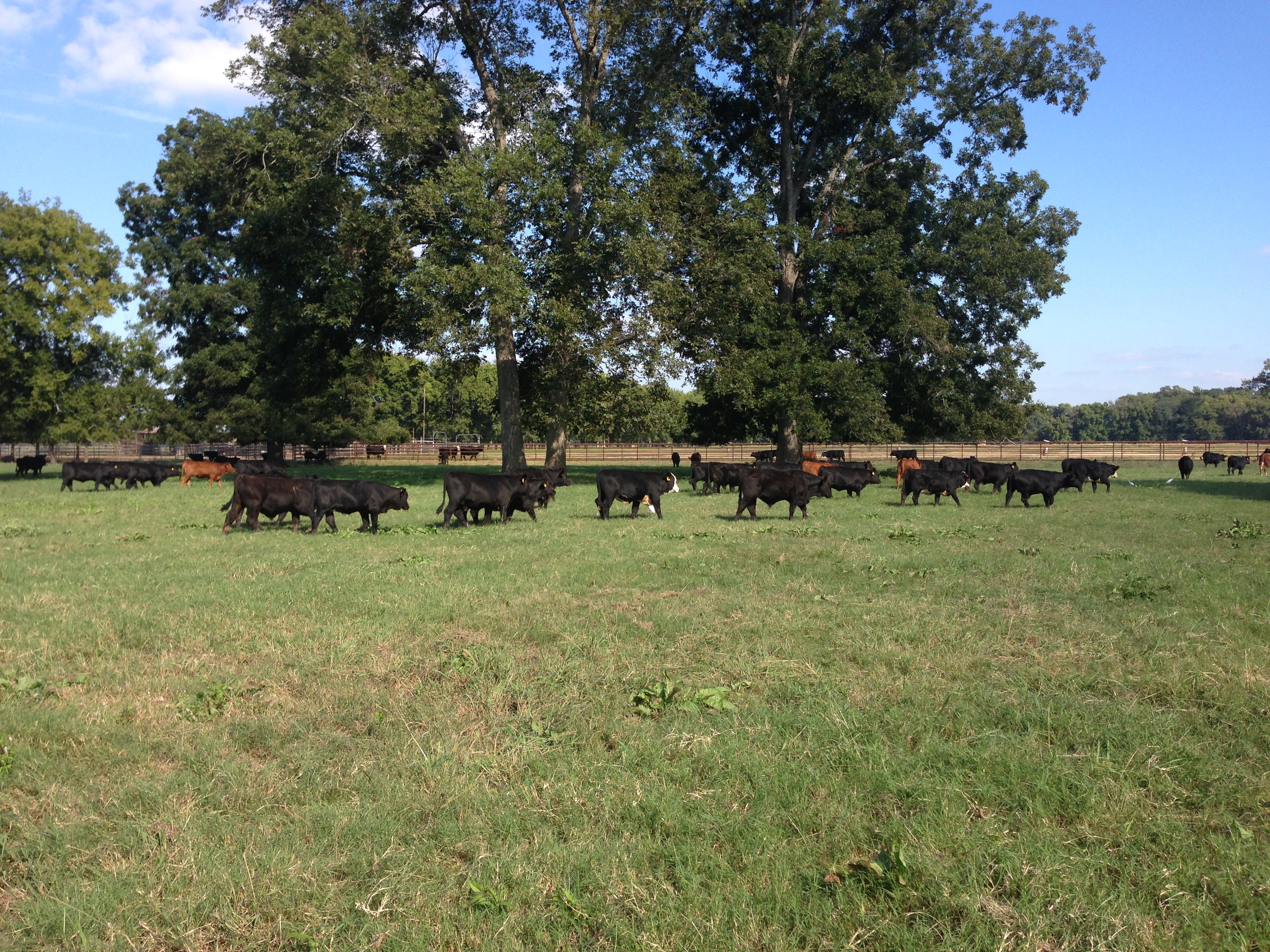 Dean Lee Beef Cattle & Forage Field Day