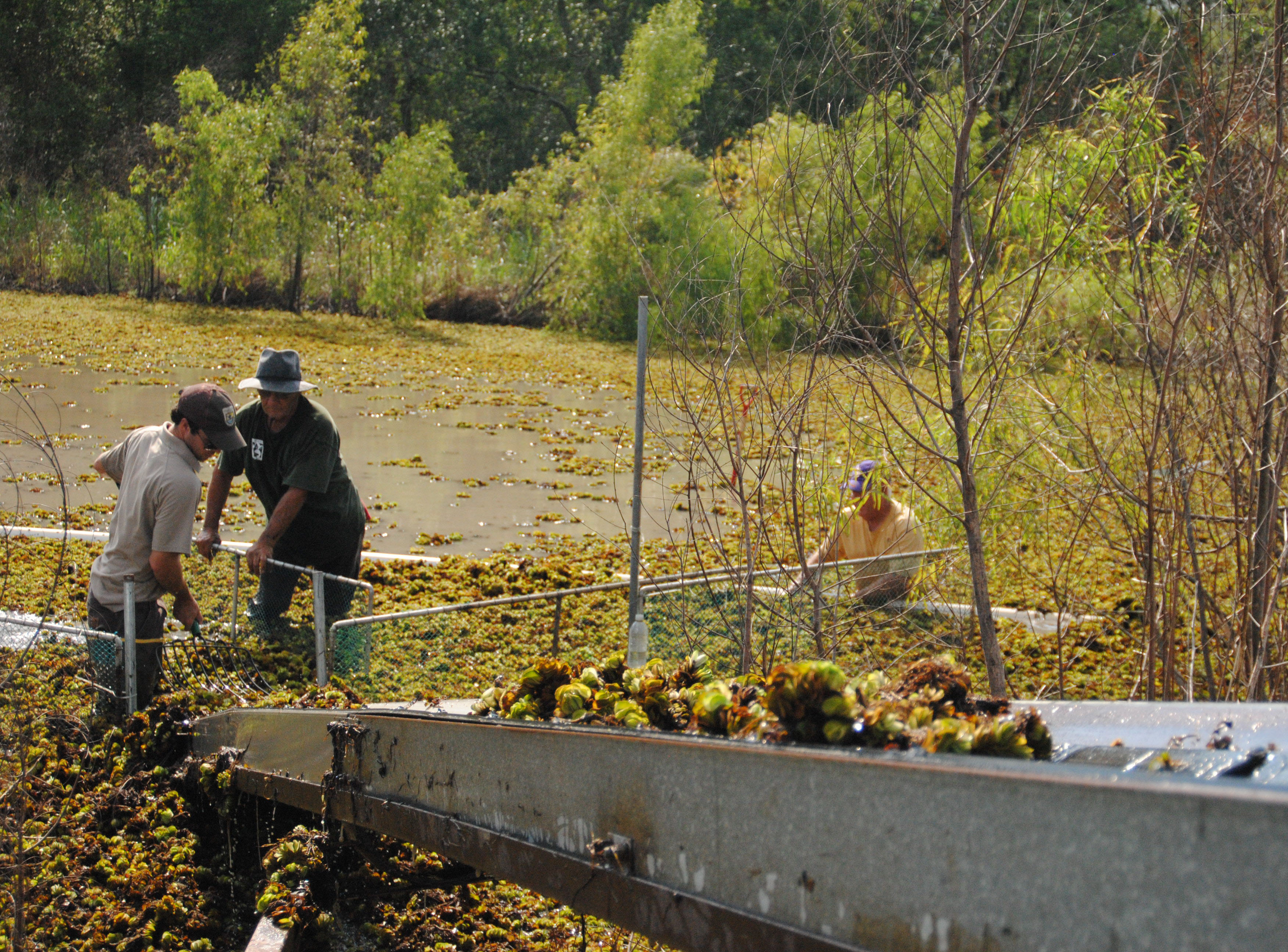 Researchers continue quest to rid Louisiana waterways of salvinia
