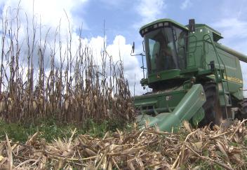 Good weather provides for a successful corn harvest
