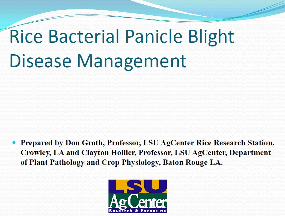 Rice Bacterial Panicle Blight Management