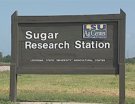 The Sugar Research Station Video